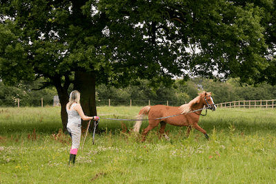 lunge line for horses