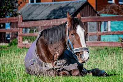 Unhealthy horse